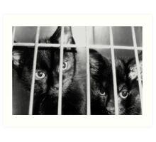 Convict Cats Art Print