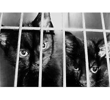 Convict Cats Photographic Print