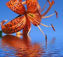 Water Lily by Tamara Mason