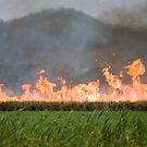 Fire Daner part 1 by Matthew Setright