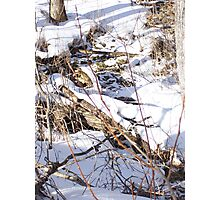 Winter in Maine Photographic Print