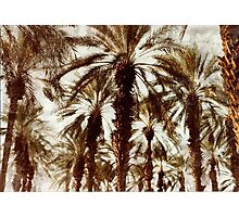 Palm Trees in Grunge Photographic Print