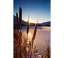 Frozen Cattail Sunrise Photographic Print