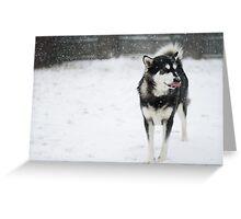 Loving the Snow Greeting Card