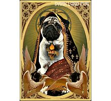 holy fawn Photographic Print