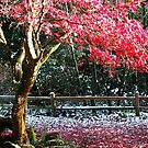 Red tree in the snow by Doria