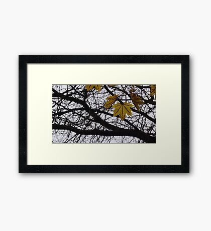 Last Days of Fall. Framed Print