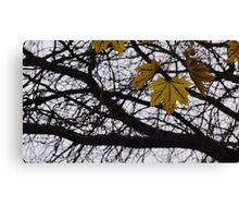 Last Days of Fall. Canvas Print