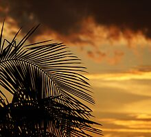 Palm Sky by Backyard