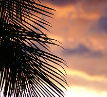 Palms on Sunset by Backyard