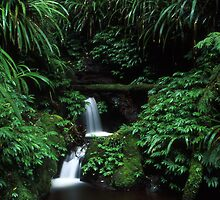 sub-tropical rainforest - Lamington NP, Qld. by Tony Middleton