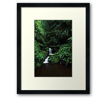sub-tropical rainforest - Lamington NP, Qld. Framed Print