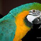 Meet a Macaw ............... by Larry Llewellyn