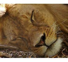 Sleepy Kitty. Photographic Print