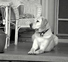 Jarman at front door by lettie1957