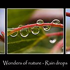 Wonders of Nature - Rain drops by Ben Shaw