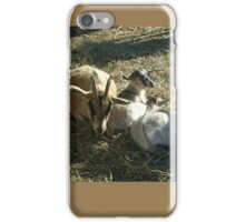Mother Goat and Her Two Kids at Secor Farms, Mahwah NJ iPhone Case/Skin