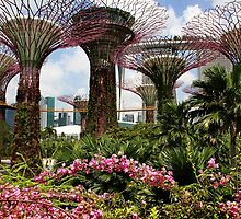 Gardens by the Bay, Singapore by Robyn Lakeman