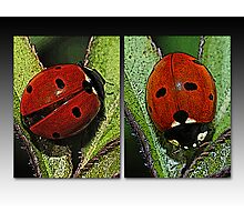 Our Lady's Bugs Photographic Print