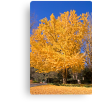 Yellow Tree in Fall Canvas Print