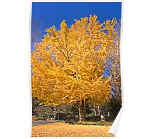 Yellow Tree in Fall Poster