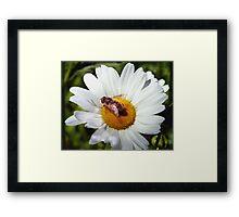 Bee and Daisy Framed Print