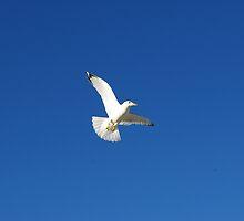 In Flight by Adrena87