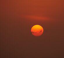 sun by Marie Tixier-Brennan