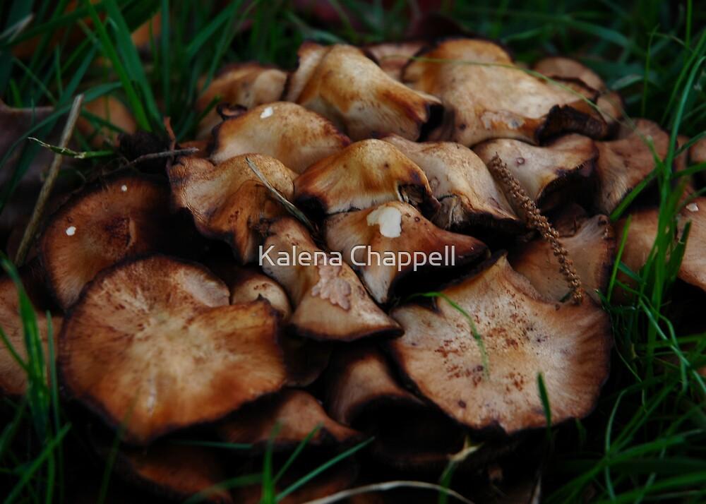 Backyard Mushrooms by Kalena Chappell