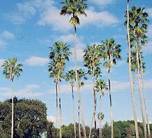 Tall Palms by njordphoto