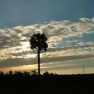 Palm Tree Sunrise by Ferguson