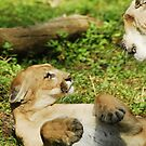 Florida Panthers by Terry Best