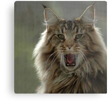 Confident Cat Metal Print