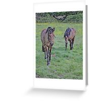 Equine Investigation B Greeting Card