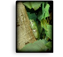 Mexican Leaf Frog Canvas Print