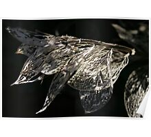 Dry leaves Poster