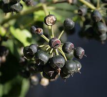 The wild fruit by Christian  Zammit