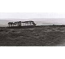 Barren Land & Trees Photographic Print
