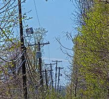 Telephone Poles by Susan S. Kline