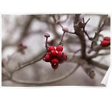 VERY BERRY RED Poster