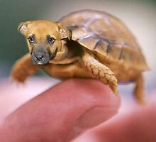 Turtle dog?  by Emilysmodernlife13