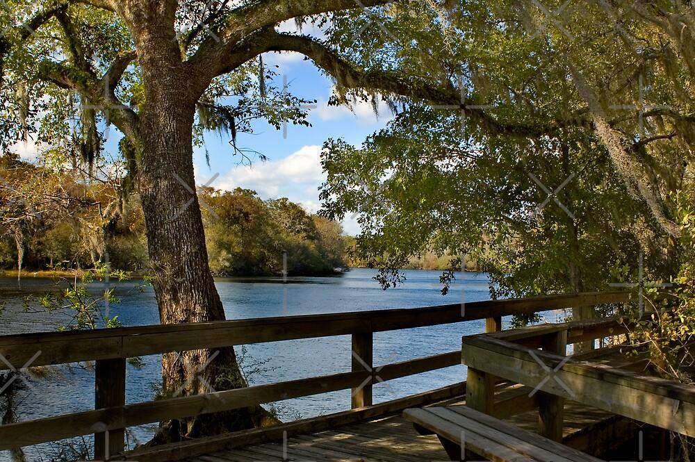 Boardwalk on the Suwannee River by Stacey Lynn Payne