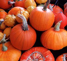 Pumpkins a'plenty by Mark Wilson