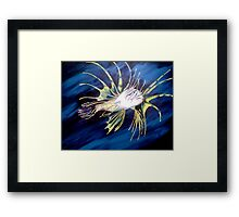 You did what to the Reef?! Framed Print