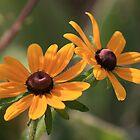 Yellow by Rich Sirko