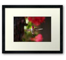 Hovering Hummer Framed Print