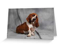 Bassets Everywhere Greeting Card