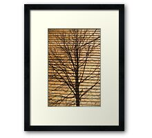 Shadow of a tree on a wall Framed Print