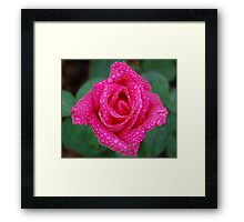 Soaked Beauty Framed Print