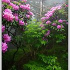 Tree, Rhodies and Fog by ThomasRBiggs